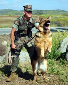 German Shepherds are intelligent enough to be a ferocious enemy while at a same time a loving and devoted friend to their human.