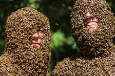 Beards of Bees