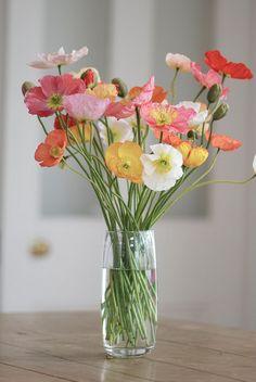 Poppies in Vase Beautiful Flower Arrangements, Floral Arrangements, Exotic Flowers, Beautiful Flowers, Purple Flowers, Lilies Flowers, Tropical Flowers, Spring Flowers, Bonsai Plante