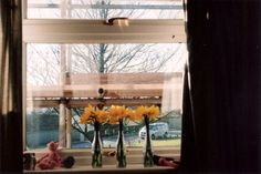 Daffodils.  #canon #canonet #35mm #film #analog #photography @canon_photos @canonuk #200asa #200iso #camera #60s #1960s #agfa #analogue #canonette #lights #lighting Rob King