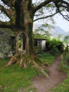 Fake - Tree Portal, Ireland - It is not real. There is a cottage running along behind the tree. Yet, looking through the tree you can see green shrubs. Oh The Places You'll Go, Places To Travel, Places To Visit, Beautiful World, Beautiful Places, Beautiful Pictures, Amazing Photos, Beautiful Boys, Belle Photo