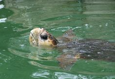 Turtles on Bribie Island