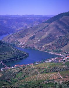 Cruise on Douro river from Oporto to Regua (Port wine region). Group and private river circuits to Port wine region.