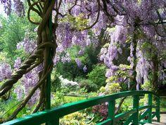 Monet's Garden Wisteria Bridge, Giverny, France