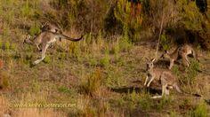 Parks Victoria - Cardinia Reservoir Park- near melbourne