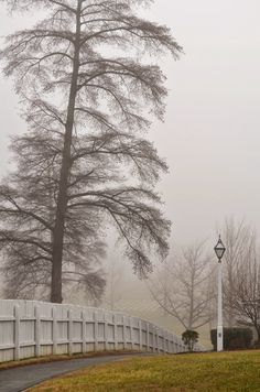 Tree in the winter fog