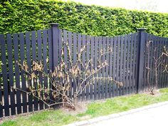 Black Scalloped Wood Picket Fence. This is exactly what I want