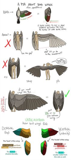 Tutorial and wing shape - for extra fun, compare these tips to the rest of the wing pics on this board! See which ones fail miserably!