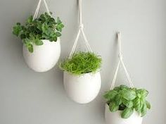 Image result for kitchen wall herb garden