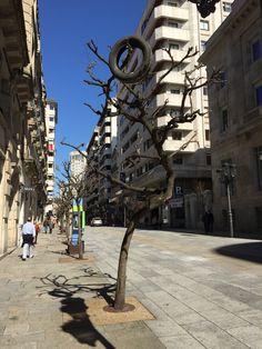 En Ourense, los árboles dan extraños frutos.