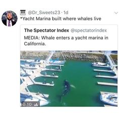stop fucking w the whales LET THEM GO FUCKEN SEA WORLD BITCHES FUCK U