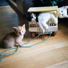 Ma quale nanna? Siamo grandi ormai possiamo giocare fino a tardi ;-) ♡  #BuonWeekend a tutti !   Dolci Sogni #(a)mici !  #Buonanotte !   #Goodnight #Sleeptime #weekend #happyweekend #catsofinstagram #cats #instacat #cutecats #sweetcats #lovelovelove #lovecat #cats #pets #animals #photooftheday  #ilovemycat #nature #catoftheday #lovecats   #catsmylove #Repost #gatti #dolcigatti #dolcicuccioli #ioamoglianimali #MIAO :-)