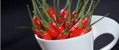 Kapsaicyna – substancja zawarta w papryczkach chilli i odpowiedzialna za ich ostry smak to samo zdrowie! Pobudza przemianę materii, więc jest pomocna w spalaniu kalorii. Dodawana do kremów i maści rozgrzewa skórę i działa przeciwbólowo. Wpływa na leczenie nowotworów. Kapsaicyna niszczy także komórki nowotworowe atakując ich mitochondria. Kolejną jej zaletą jest stymulowanie wytwarzania endorfin – naszych hormonów szczęścia. Smacznego www.zdrowiemojapasja.pl