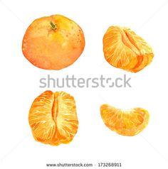 stock-photo-set-of-mandarin-orange-fruit-watercolor-painting-173268911.jpg (450×454)