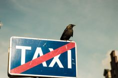 A crow on a sign in Gdańsk