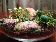 Tiny T-rex dinosaur succulent terrarium