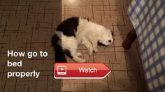 😸 Funny cat go to bed 😼 😽 on Pet Lovers 😻