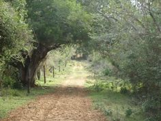 One of the Eco Systems in Bonamanzi Game Reserve