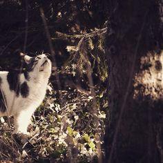 Payo ) #cat