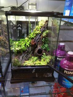 Carnivorous plant vivarium Fine I'll just post the… Chameleon Terrarium, Gecko Terrarium, Aquarium Terrarium, Reptile Terrarium, Planted Aquarium, Mini Terrarium, Tropical Terrariums, Reptile Habitat, Reptile Room