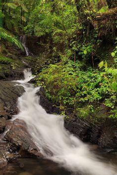 El Yunque, Puerto Rico. Una Maravilla!!