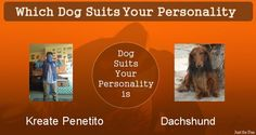 Check my results of Which Dog Suits Your Personality Facebook Fun App by clicking Visit Site button