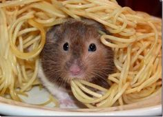 i'm soooooooooooooooooooooooooooooooooooooooooooooooooooooooooooooooooooooooooooooooooooooooooooooooooooooooooooooooooooooooooooooooooooooooooooooooooooooooooooooooooooooooooooooooooooooooooooooooooooooooooooooooooooooooooooooooooooooooooooooooooooooooooooooooooooooooooooooo    hungry
