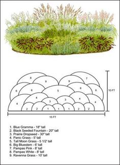 Ornamental grass layout Plan- | Everything you need to know about Gardening Ornamental Grasses, Ornamental Grass Landscape, Garden Planning, Garden Landscape Design, Landscape Plans, Garden Plants, Garden Landscaping, Plant Guide, Garden Borders