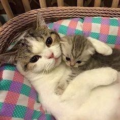 С мамой- кошкой
