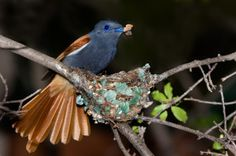 Check out my very first blog! It's about the Paradise Fly Catcher. #photography #blogging