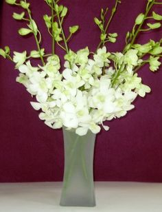 Fresh Flowers - White Dendrobium Orchids with Vase $34.95