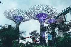 Under The Dome And Into The Forest... In Singapore, Flower Dome and Cloud Forest, Gardens By The Bay (19)