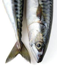 Mackerel stripes