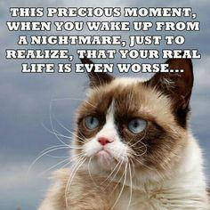 Grumpy Cat with da breakdown! Grumpy Cat Quotes, Funny Grumpy Cat Memes, Funny Animal Jokes, Funny Animal Pictures, Animal Memes, Funny Cats, Funny Animals, Cute Animals, Funny Memes