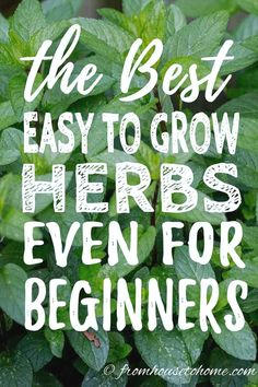 7 of the Best Easy To Grow Herbs For Your Garden I LOVE these tips for growing herbs in the garden. All of these plants are easy to grow so they are great for beginners, and can survive in pots on the patio. Best Herbs To Grow, Growing Herbs, Diy Garden, Shade Garden, Herbs Garden, Garden Bed, Herb Plants, Corner Garden, Pot Plants