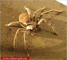 unusual australian wildlife pics | Unique Australian Animals - An introduction to Australian Wildlife