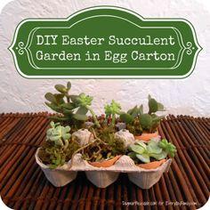 DIY succulents in egg shells!