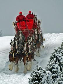"""Bethlehem, New England A Winter Sleigh Ride with Horses / Come join me on (""""Believe in the Magic of Christmas"""" on Facebook & Pinterest) I plan to Surprise & Delight you this Holiday Season! XOX Jody"""