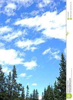 Photo about A vivid image looking up at a bright blue sunny sky with dispersed clouds and an arch of ponderosa pine trees in the skyline. Image of looking, clouds, vivid - 103393909 Image Look Up, Tree Line, Arch, Skyline, Clouds, Mountains, Blue, Travel, Longbow