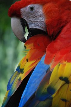 Held these birds so many times in Mexico (along with Toucan's, monkeys, and iguanas) they are gorgeous.