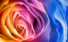 Download wallpapers multi-colored rosebud, colored abstraction, colorful flower, rose