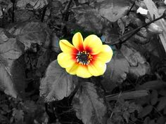 Color Splash Photography | ColorSplash » 148Apps » iPhone, iPad, and iPod touch App Reviews and ...