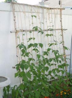 La culture de certains légumes du potager, comme les haricots rames, les tomates, les concombres ou les petits pois, nécessite des tuteurs ou treillis. Cet article présente plusieurs exemples de configuration et modèles à faire soi-même.