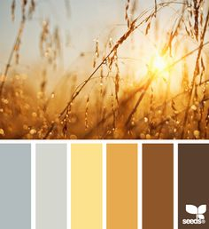 Grey, yellow, brown - believe it or not, it's great out in a field during sunset!