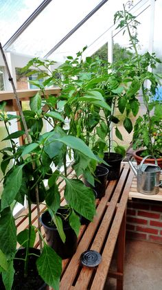 #flowers #plants #greenhouse #growing #gardening #spring #greenfingers #gardendesign #gardenlandscape #coldframes #gardenaccesories