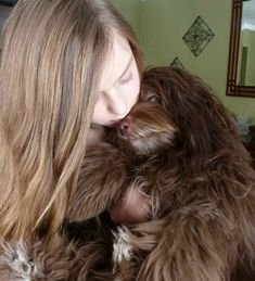HavaHug Havanese Puppies, is a Michigan based Havanese breeder of quality Chocolate AKC Havanese Dogs. Non-shedding, Hypo-allergenic Puppies. Breeder of the Most Beautiful Chocolate Havanese! Havanese Breeders, Havanese Grooming, Havanese Dogs, Dog Grooming, Havanese Puppies For Sale, Akita Puppies, Baby Puppies, I Love Dogs, Cute Dogs