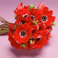 Wedding Bouquets A Red Anemone Bouquet for a Modern Summer Wedding - Going for a bouquet with a single bloom this bold makes a big style statement. Red Anemone, Anemone Bouquet, Anemone Flower, Anemones, Flower Bouquets, Red Bouquet Wedding, Beach Wedding Flowers, Anemone Wedding, Amazing Flowers