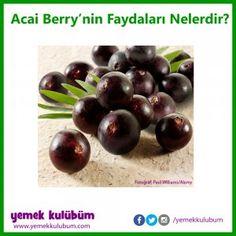 Acai Berry Üzümü faydaları zararları nelerdir, Acai Berry Üzümü neye iyi gelir, Acai Berry Üzümü neye faydası vardır, Acai Berry Üzümü hangi hastalığa iyi gelir, benefits of Acai Berry #yemekkulubum #yemek #yemektarifi #yemektarifleri #püfnoktası #mutfak #sağlık #beslenme #sağlıklıyaşam #doğrubeslenme #sağlıklıbeslenme #sağlıklıhayat #alergy #alerji #kalp #kalpsağlığı #bağışıklık #sistem #acaiberry #faydaları #nelerdir #faydalarınelerdir