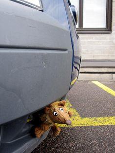 Työpaikan pihassa seisoo pakettiauto, jonka puskurikyytiläinen nauratti. Valistus & varoitus eläville lajitovereille? Tampere