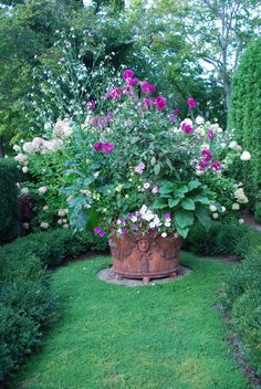 Beautiful Container with Dahlia for Color to 'Pop' against the White Hydrangeas Behind the Container...